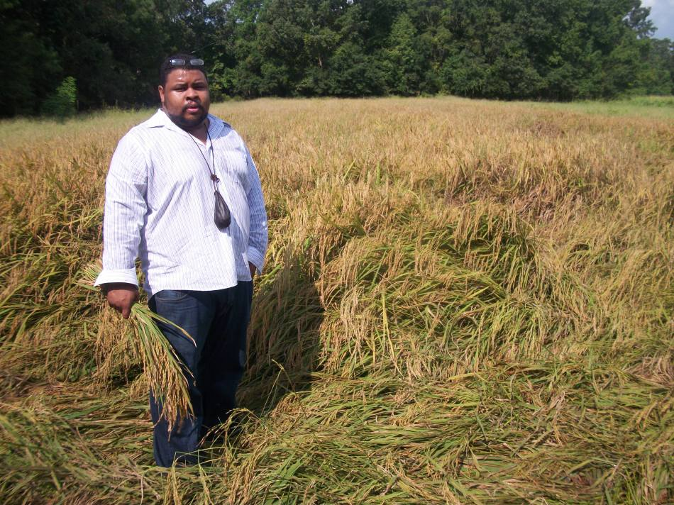 In the Rice Field, SC