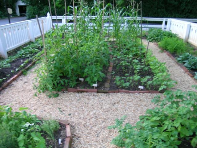 A 19th Century Heirloom Kitchen Garden I Grew Myself, 2009