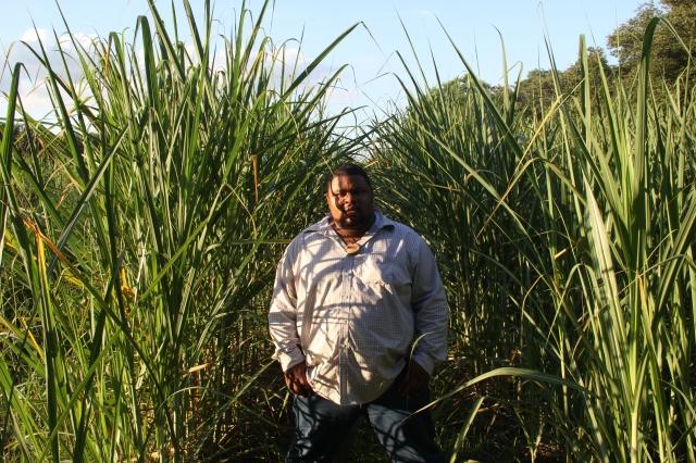 The Sugarcane Sea