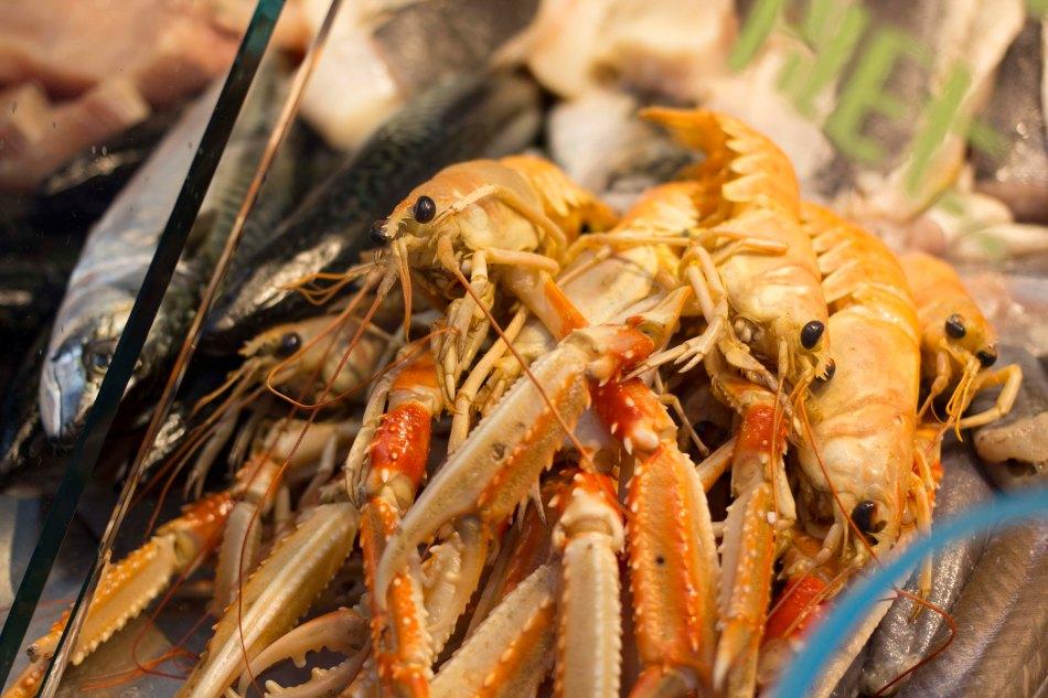 Norway lobsters