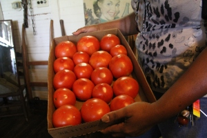 Creole Tomatoes, Louisiana, The Cabin Restaurant